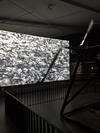 EYE- Filmmuseum Amsterdam  Adam Broomberg & Oliver Chanarin Dodo, 2014