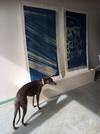 Gestern in Berlin, Haus der Statistik #moabees und #cyanotypie und #hund (love!)