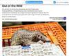 hey hier ist ein sehr interessanter Textbeitrag zum Thema Wildtierhandel, ein super Thema zum Recherchieren, was so alles sienen Weg in die Haushalte diese Landes findet...